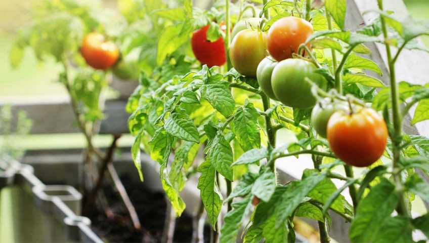 5-tips-for-protecting-your-garden-from-pests-top